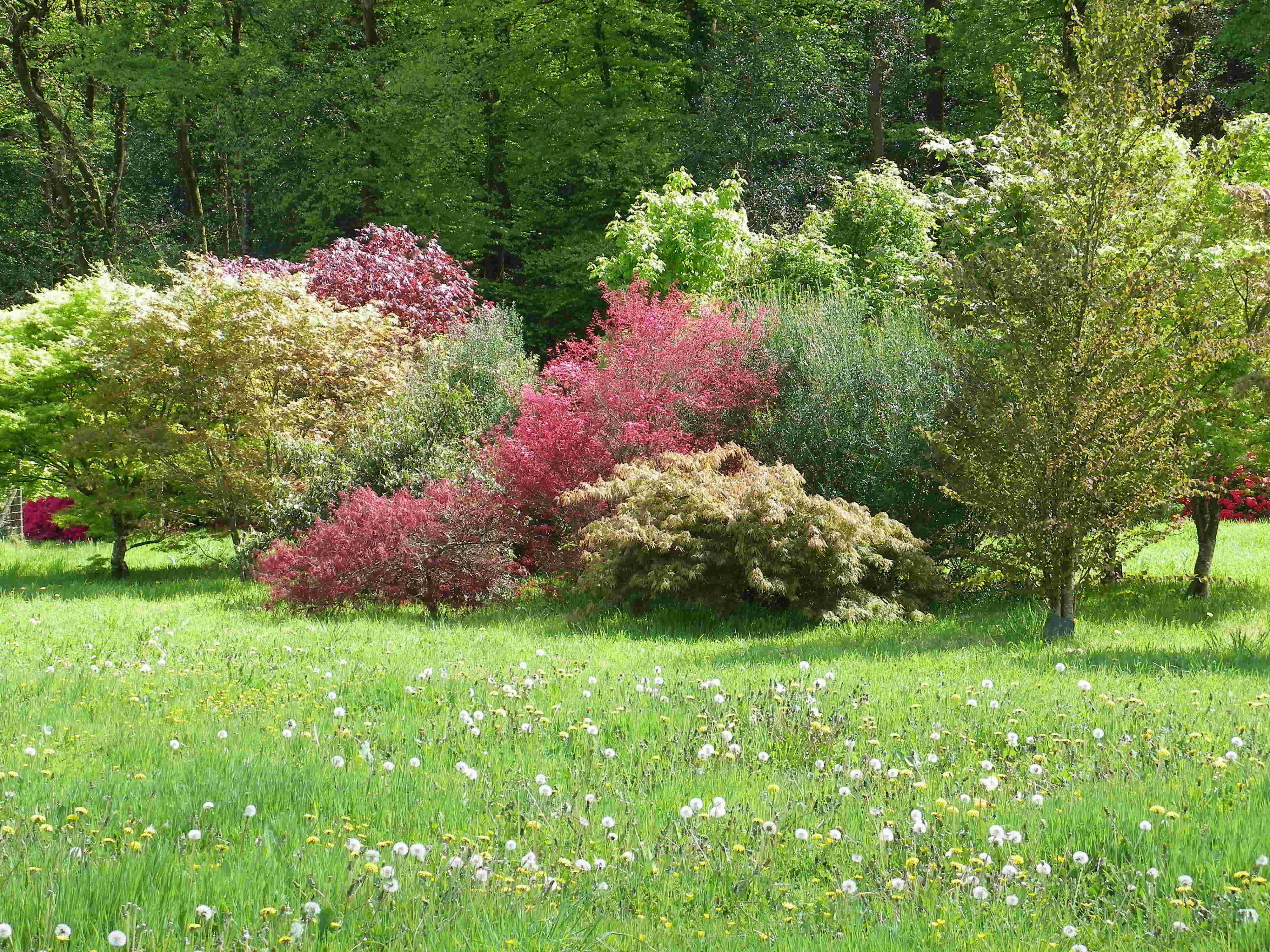 jardin chantal et joseph
